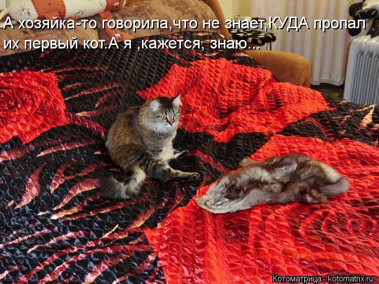 Котоматрица: А хозяйка-то говорила,что не знает,КУДА пропал их первый кот.А я ,кажется, знаю...
