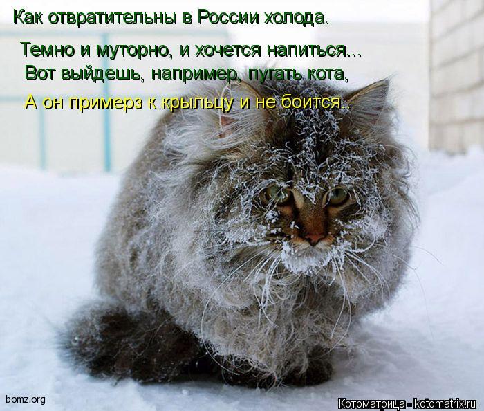 Котоматрица: Как отвратительны в России холода.   Темно и муторно, и хочется напиться...    Вот выйдешь, например, пугать кота,  А он примерз к крыльцу и не бо