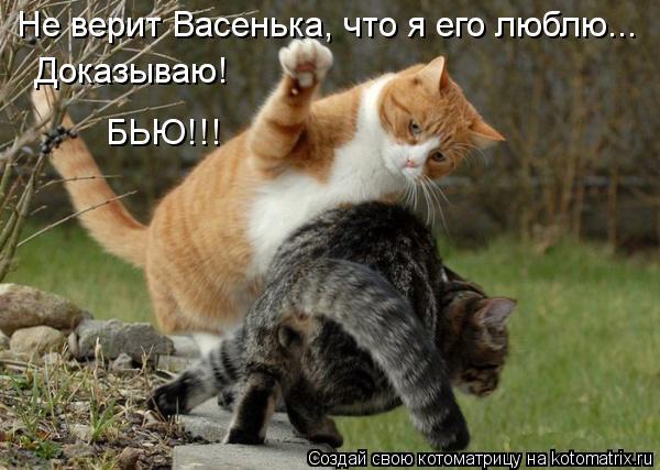 Котоматрица: Не верит Васенька, что я его люблю... Доказываю! БЬЮ!!!