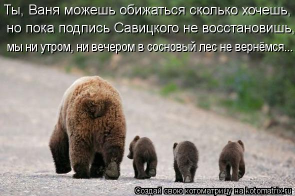 Котоматрица: Ты, Ваня можешь обижаться сколько хочешь, но пока подпись Савицкого не восстановишь, мы ни утром, ни вечером в сосновый лес не вернёмся...