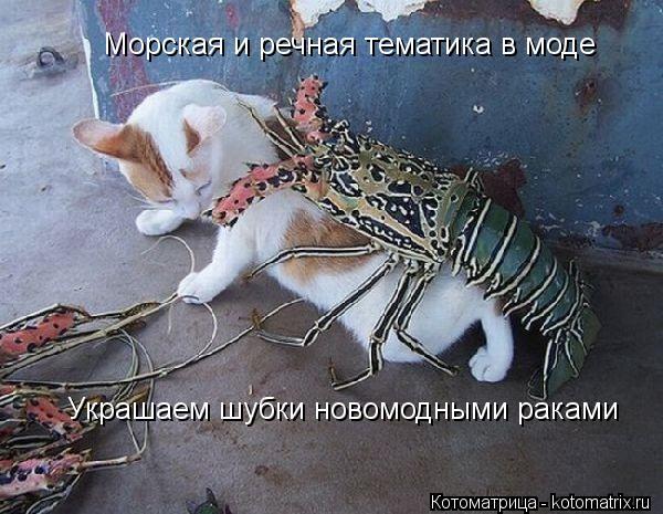 Котоматрица: Морская и речная тематика в моде Украшаем шубки новомодными раками