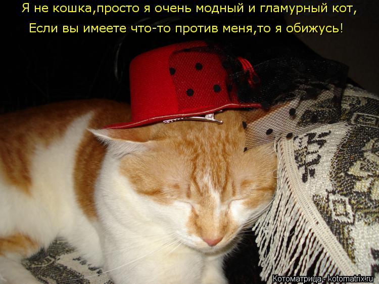 Котоматрица: Я не кошка,просто я очень модный и гламурный кот,  Если вы имеете что-то против меня,то я обижусь!