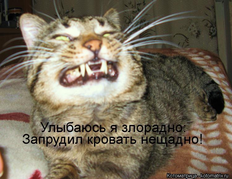 Котоматрица: Улыбаюсь я злорадно: Запрудил кровать нещадно!