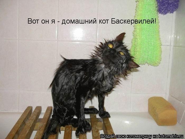Котоматрица: Вот он я - домашний кот Баскервилей!