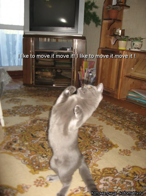 Котоматрица: I like to move it move it! I like to move it move it !