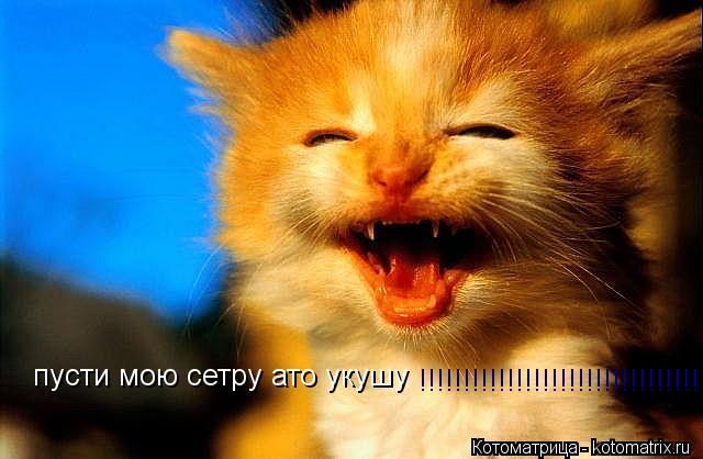 Котоматрица: пусти мою сетру ато укушу !!!!!!!!!!!!!!!!!!!!!!!!!!!!!!!!!!!!!!!!!!!!!!!!!!!!!!!!