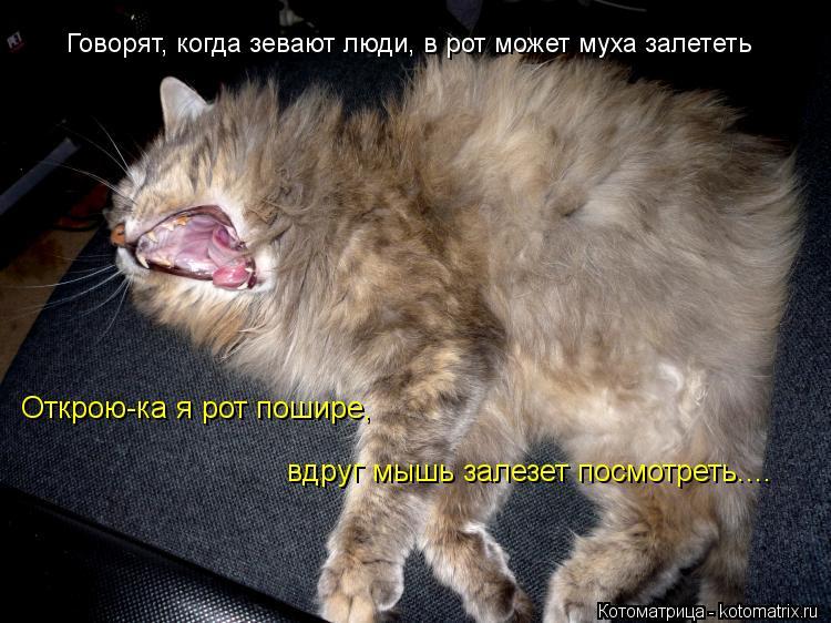 Котоматрица: Говорят, когда зевают люди, в рот может муха залететь Открою-ка я рот пошире,  вдруг мышь залезет посмотреть....