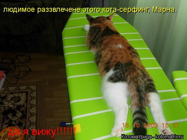 Котоматрица: людимое раззвлечене этого кота-серфинг, Марна. да я вижу!!!!!!
