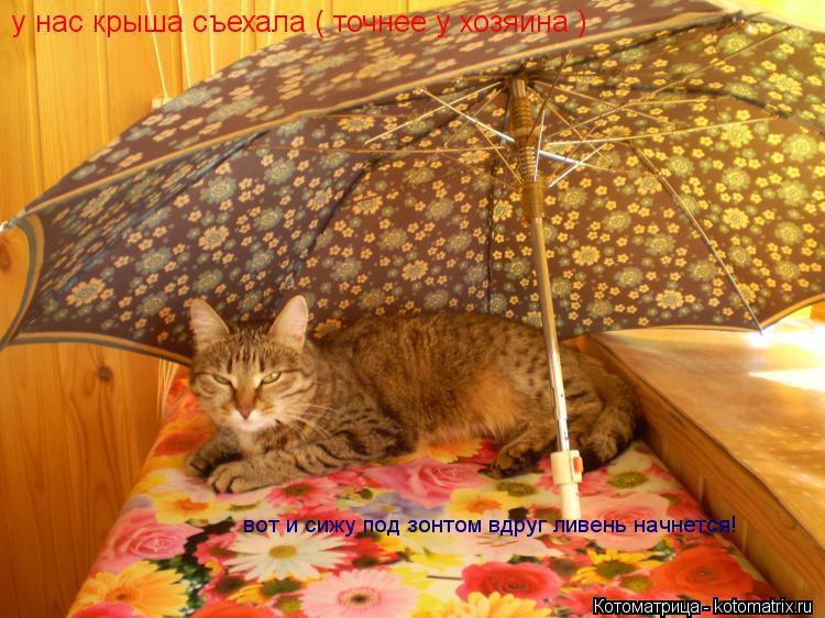 Котоматрица: у нас крыша съехала ( точнее у хозяина ) вот и сижу под зонтом вдруг ливень начнется!