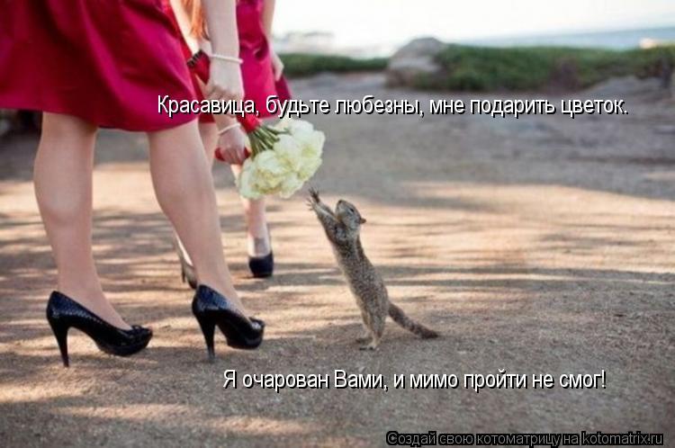 Котоматрица: Красавица, будьте любезны, мне подарить цветок. Я очарован Вами, и мимо пройти не смог!