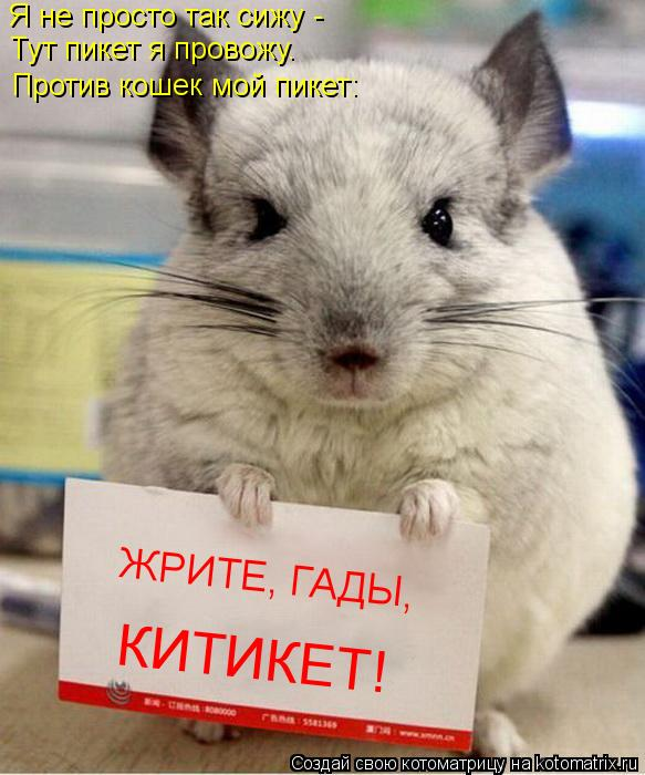 Котоматрица: Я не просто так сижу -  Тут пикет я провожу. Против кошек мой пикет: ЖРИТЕ, ГАДЫ,  КИТИКЕТ!