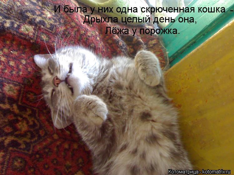 Котоматрица: И была у них одна скрюченная кошка Дрыхла целый день она, Лёжа у порожка.  -