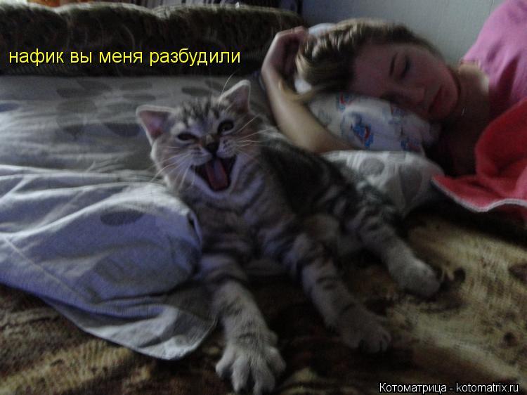 Котоматрица: нафик вы меня разбудили