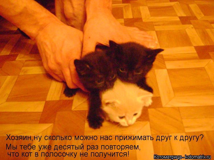 Котоматрица: Хозяин,ну сколько можно нас прижимать друг к другу? Мы тебе уже десятый раз повторяем, что кот в полосочку не получится!