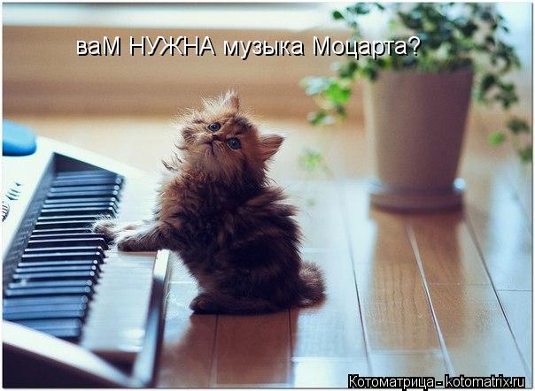 Котоматрица: ваМ НУЖНА музыка Моцарта?