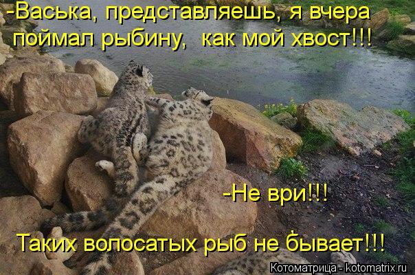 Котоматрица: , -Васька, представляешь, я вчера  поймал рыбину,  как мой хвост!!! -Не ври!!!  Таких волосатых рыб не бывает!!!