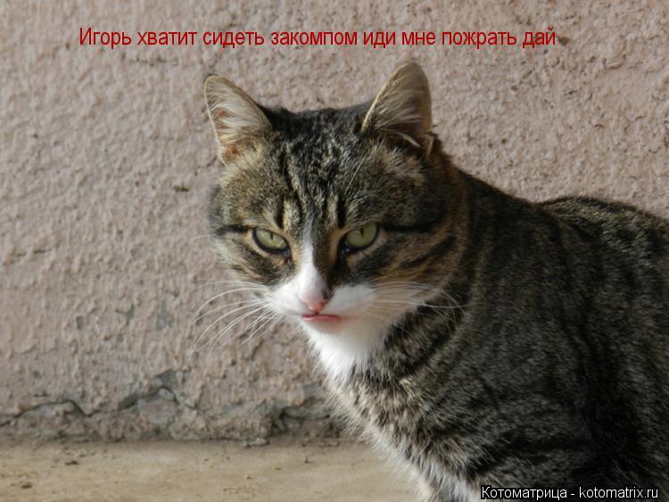 Котоматрица: Игорь хватит сидеть закомпом иди мне пожрать дай