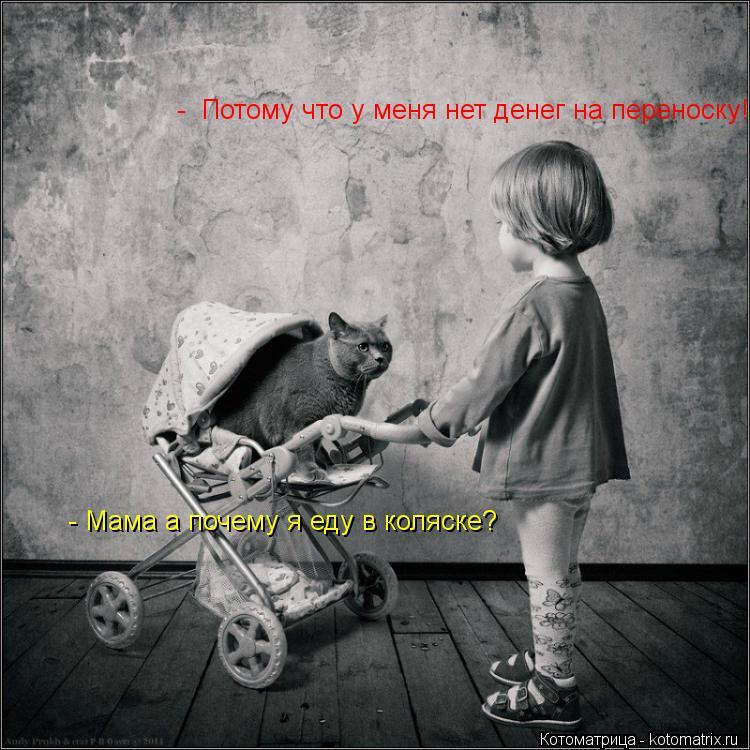 Котоматрица: - Мама а почему я еду в коляске?  -  Потому что у меня нет денег на переноску!