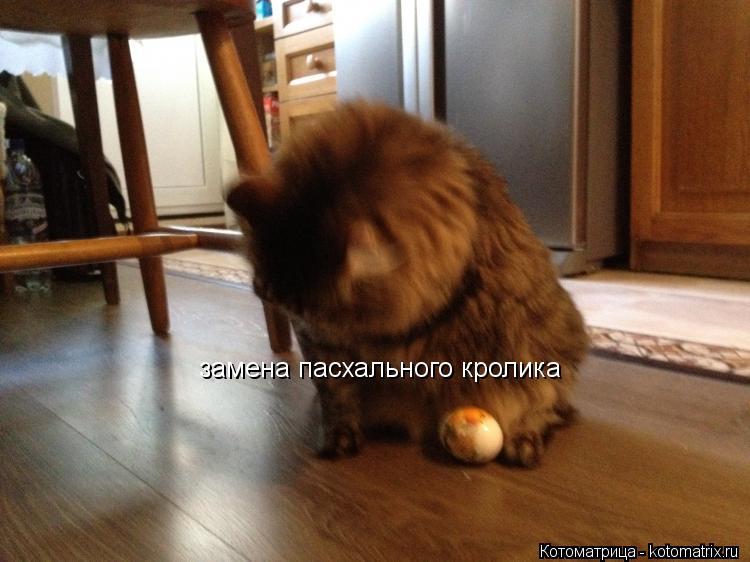 Котоматрица: замена пасхального кролика