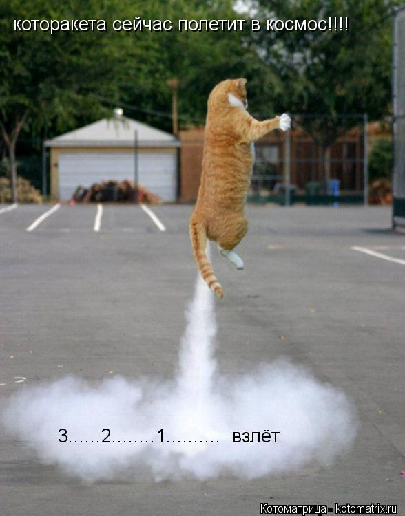 Котоматрица: которакета сейчас полетит в космос!!!! 3......2........1..........  взлёт