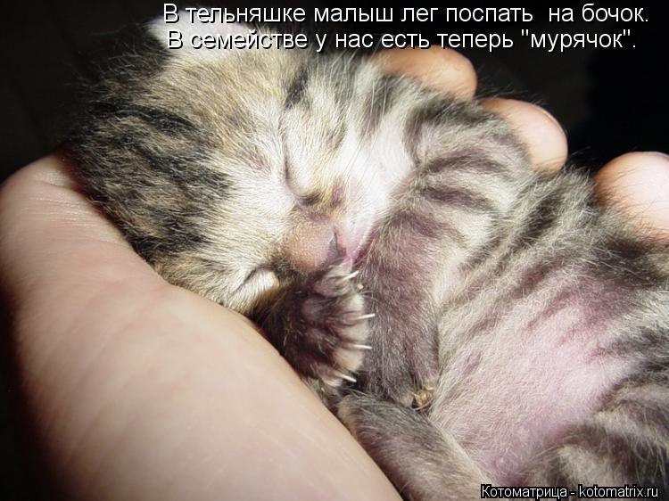 """Котоматрица: В тельняшке малыш лег поспать  на бочок. В семействе у нас есть теперь """"мурячок""""."""