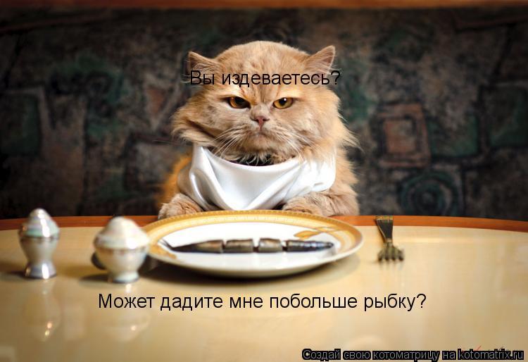 Котоматрица: Вы издеваетесь? Может дадите мне побольше рыбку?