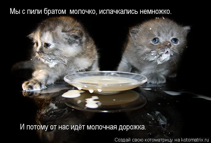 Котоматрица: Мы с пили братом  молочко, испачкались немножко. И потому от нас идёт молочная дорожка.