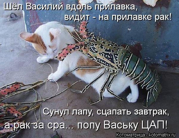 Котоматрица: Шёл Василий вдоль прилавка, видит - на прилавке рак! Сунул лапу, сцапать завтрак, а рак за сра... попу Ваську ЦАП!