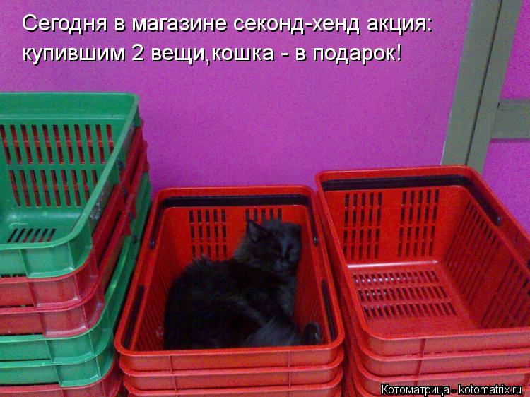 Котоматрица: Сегодня в магазине секонд-хенд акция: купившим 2 вещи кошка - в подарок! ,