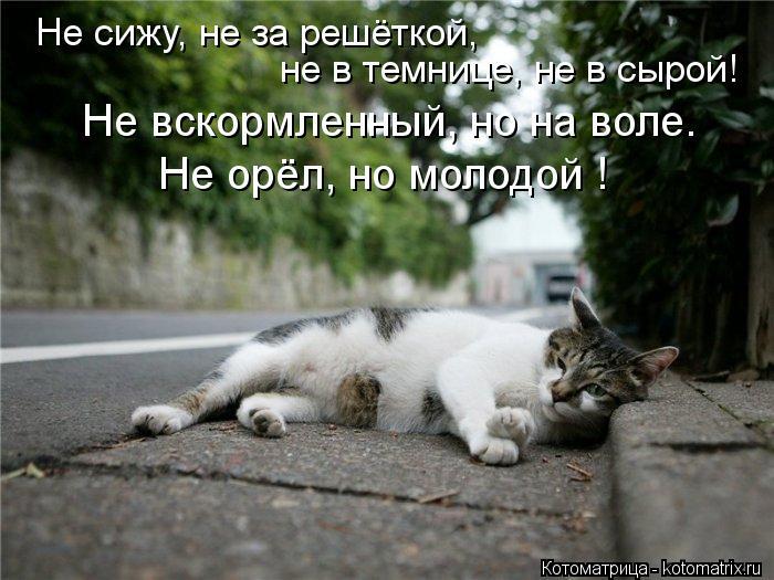 Котоматрица: Не сижу, не за решёткой, не в темнице, не в сырой! Не вскормленный, но на воле. Не орёл, но молодой !