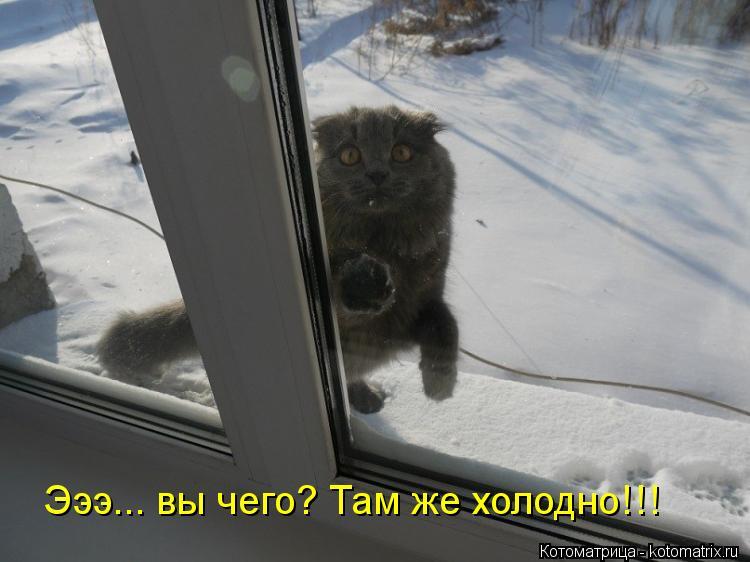 Котоматрица: Эээ... вы чего? Там же холодно!!!