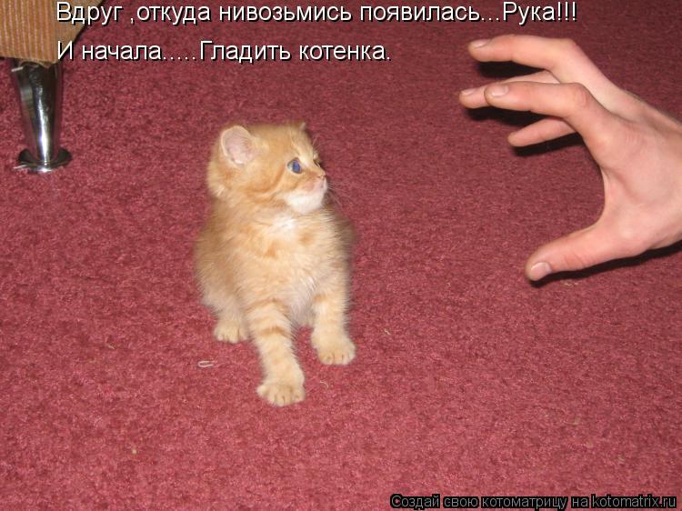 Котоматрица: Вдруг ,откуда нивозьмись появилась...Рука!!! И начала.....Гладить котенка.