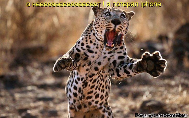 Котоматрица: о нееeeeeeeeeeeeeeeт ! я потерял iphone