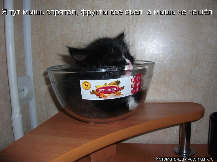 Котоматрица: Я тут мышь спрятал, фрукты все съел, а мышь не нашёл.