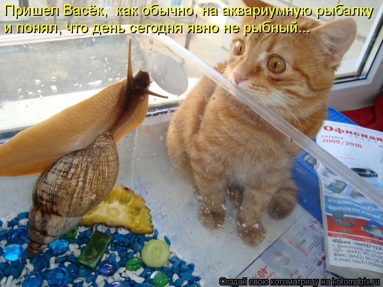 Котоматрица: Пришел Васёк,  как обычно, на аквариумную рыбалку и понял, что день сегодня явно не рыбный...