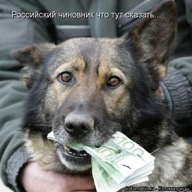 Котоматрица: Российский чиновник что тут сказать...