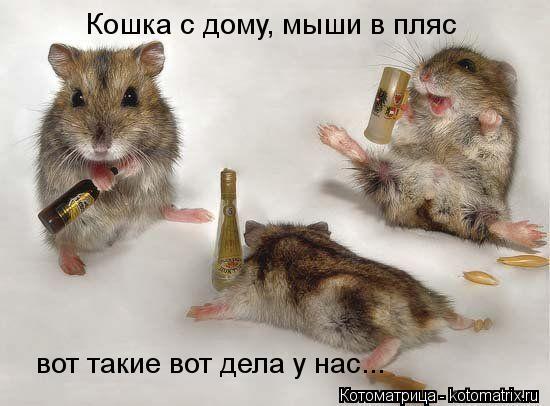 Котоматрица: Кошка с дому, мыши в пляс вот такие вот дела у нас...