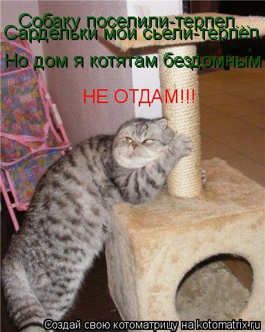 Котоматрица: Собаку поселили-терпел... Сардельки мои сьели-терпел... Но дом я котятам бездомным НЕ ОТДАМ!!!