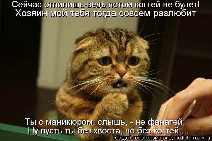 Котоматрица: Сейчас отпилишь-ведь потом когтей не будет! Хозяин мой тебя тогда совсем разлюбит Ты с маникюром, слышь, - не фанатей, Ну пусть ты без хвоста,