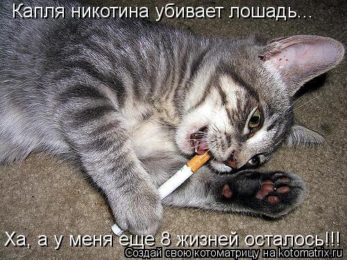 Котоматрица: Капля никотина убивает лошадь... Ха, а у меня еще 8 жизней осталось!!!