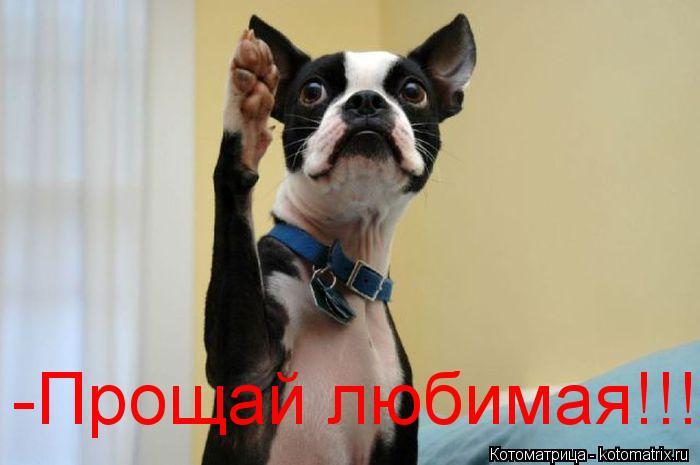Котоматрица: -Прощай любимая!!!!!