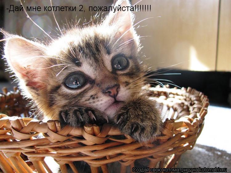 Котоматрица: -Дай мне котлетки 2, пожалуйста!!!!!!!