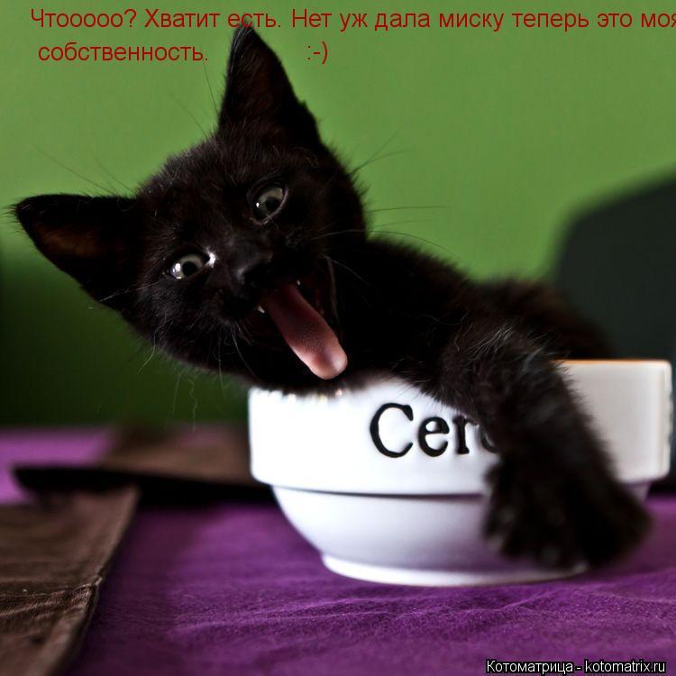 Котоматрица: Чтооооо? Хватит есть. Нет уж дала миску теперь это моя собственнось. собственность. :-)