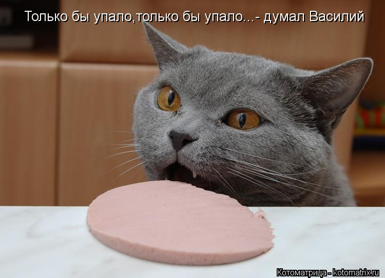 Котоматрица: Только бы упало,только бы упало...- думал Василий