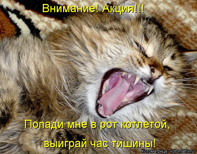 Котоматрица: Внимание! Акция!!! Попади мне в рот котлетой, выиграй час тишины!