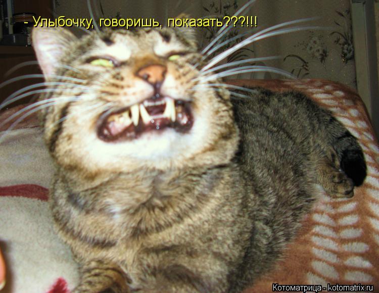 Котоматрица: - Улыбочку, говоришь, показать???!!!