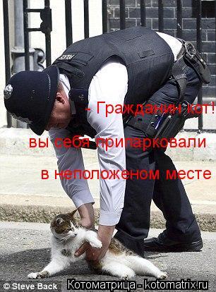 Котоматрица: - Гражданин кот!  вы себя припарковали в неположеном месте