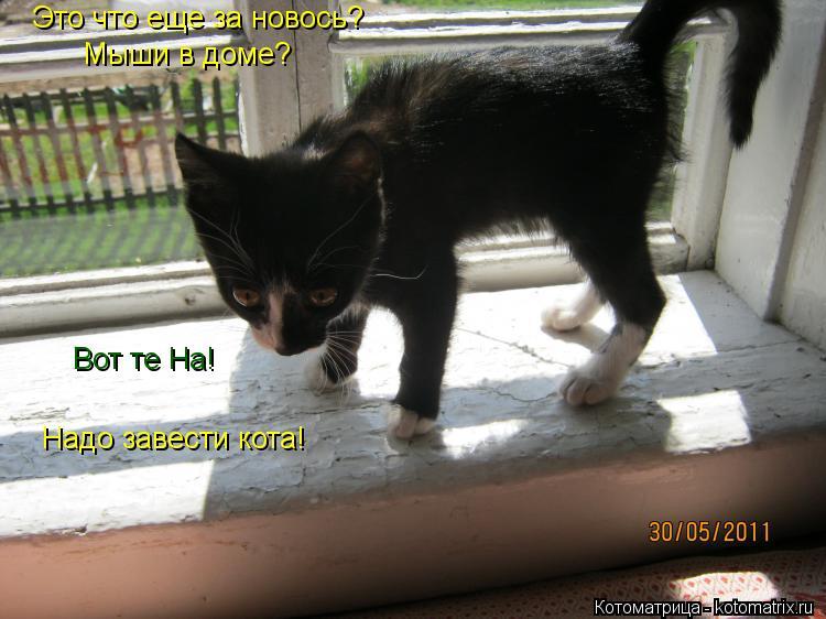 Котоматрица: Это что еще за новось? Мыши в доме? Вот те На! Надо завести кота!