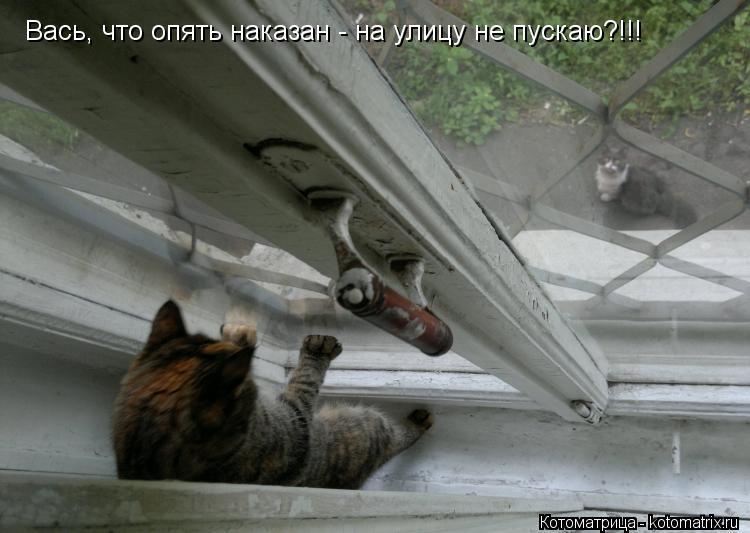 Котоматрица: Вась, что опять наказан - на улицу не пускаю?!!!