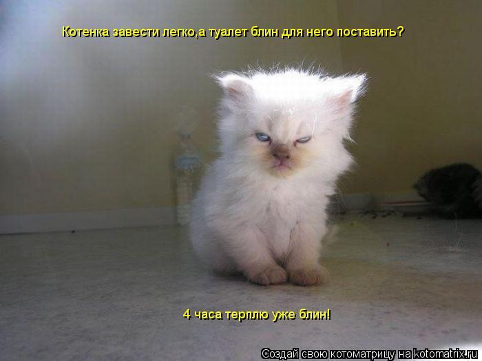 Котоматрица: Котенка завести легко,а туалет блин для него поставить? 4 часа терплю уже блин!